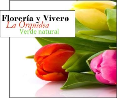 Floreria y vivero la orquidea entrega de flores a for Vivero a domicilio