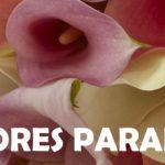 FLORES PARANA